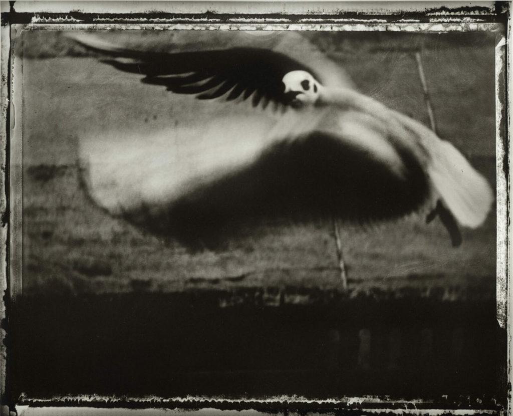 talivera-zoom-artiste-sarah-moon-la-mouette-1998