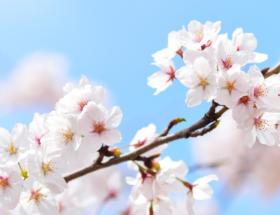talivera-quizz-japon-cérémonie-thé-ikebana-jardins-japonais